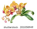watercolor colorful orchid... | Shutterstock .eps vector #201058949