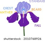 parts of iris flower isolated... | Shutterstock .eps vector #2010768926