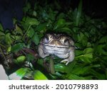 A Closeup Shot Of A Toad On...
