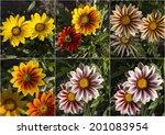 Pretty Collage Presentation Of...