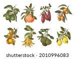 Hand Drawn Citrus Plants...