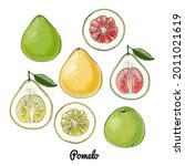 green pomelo. vector food icons ...   Shutterstock .eps vector #2011021619