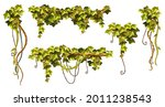 liana branches  ivy and...   Shutterstock .eps vector #2011238543