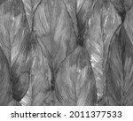 schefflera arboricola seamless...   Shutterstock . vector #2011377533