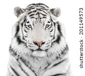 White Tiger Isolated On White...