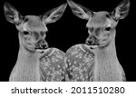 Cute Deers Standing In The...
