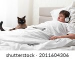 A Domestic Cat Is Guarding A...