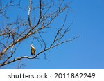 Stork Perched On A Tree Branch...