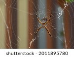 Silver Garden Spider  Silver...
