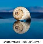 Reflection Of A Seashell. Sea ...