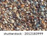 small seashells on the beach.... | Shutterstock . vector #2012183999