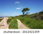 windswept tree on empty shoreline