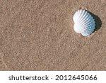 Summer Sale With Seashells ...