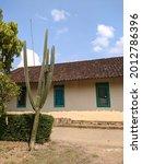 Cactus Tree In Magelang Housing ...
