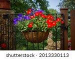 Brightly Coloured Petunias...