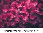 celosia or wool flowers or... | Shutterstock . vector #201344519