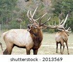 elk  bugle  deer  antlers  herd ... | Shutterstock . vector #2013569