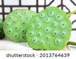 Lotus Seed Seedpod Of The Lotus
