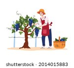 harvest grapes on agriculture... | Shutterstock .eps vector #2014015883