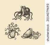 octopus illustrations. mollusk... | Shutterstock .eps vector #2014079693