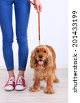 Stock photo english cocker spaniel and owner in room 201433199