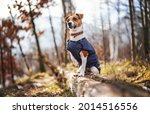 small jack russell terrier in...   Shutterstock . vector #2014516556