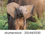 Stock photo curious baby elephant 201465530