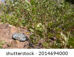 Desert Vegetation And Large...