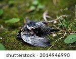 The Carcass Of A Bird On The...