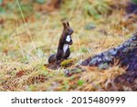 Squirrel Small Wild Animal In...