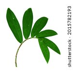 Fresh Green Foliage Plants With ...