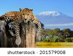 Leopard Sitting On A Tree On A...