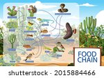 desert food web and food chain  ... | Shutterstock .eps vector #2015884466