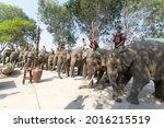 Elephant Racing  When The New...