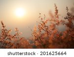 the flower with sunlight | Shutterstock . vector #201625664