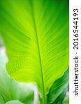 Close Up Of Vibrate Green Leaf...
