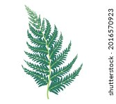 the fern leaves are redrawn as... | Shutterstock .eps vector #2016570923