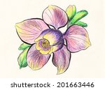 hand draw flower on paper | Shutterstock . vector #201663446