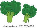 vector illustration of broccoli....   Shutterstock .eps vector #2016706556