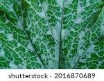 Background Texture Leaf Farm...