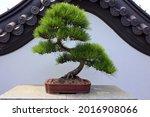 bonsai. it is an asian art form ... | Shutterstock . vector #2016908066