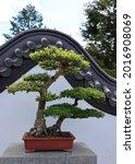 bonsai. it is an asian art form ... | Shutterstock . vector #2016908069