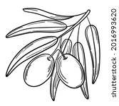 hand drawn simple olive branch... | Shutterstock .eps vector #2016993620