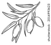 hand drawn simple olive branch... | Shutterstock .eps vector #2016993623