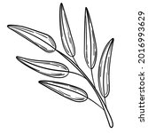 hand drawn simple olive branch... | Shutterstock .eps vector #2016993629