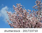 kyoto  japan   cherry blossoms  ... | Shutterstock . vector #201723710
