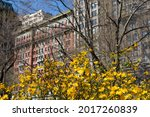 Blooming Yellow Flowers On A...