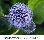 Garden With Blue Globe Thistles