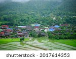 Rice Field  A Natural Beauty On ...