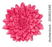 Beautiful Pink Dahlia With The...